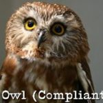 compliant-owl-profile