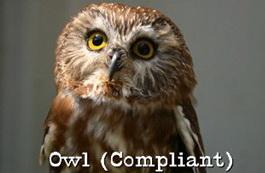 compliant-owl-profile