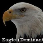 eagle-dominant-profile