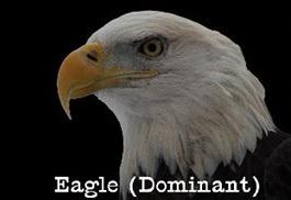 eagle-dominant-profile